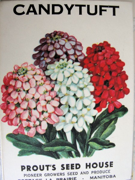 VINTAGE SEED PACKET BEAUTIFUL FLORAL IDEAL FOR FRAMING