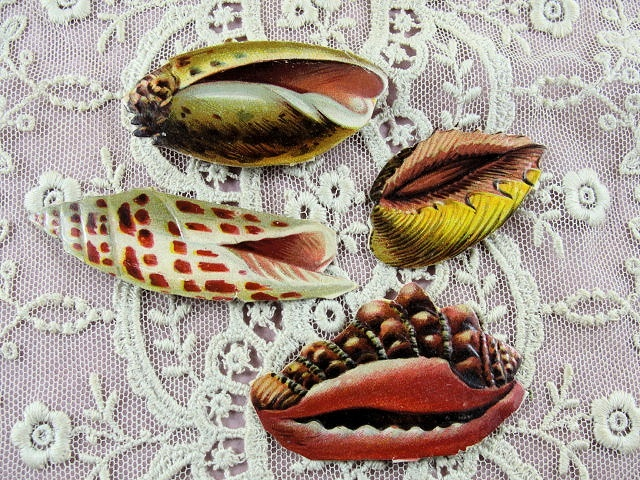 Lovely Victorian Die Cut Scraps SEASHELLS Hard To Find Great For Display Fine Crafts Scrapbooking
